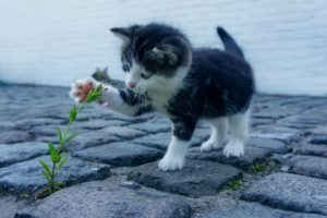 cute baby animal pictures